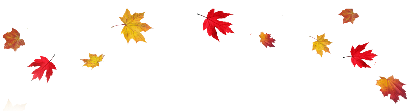 Transparent-Fall-Leaves-Border-PNG
